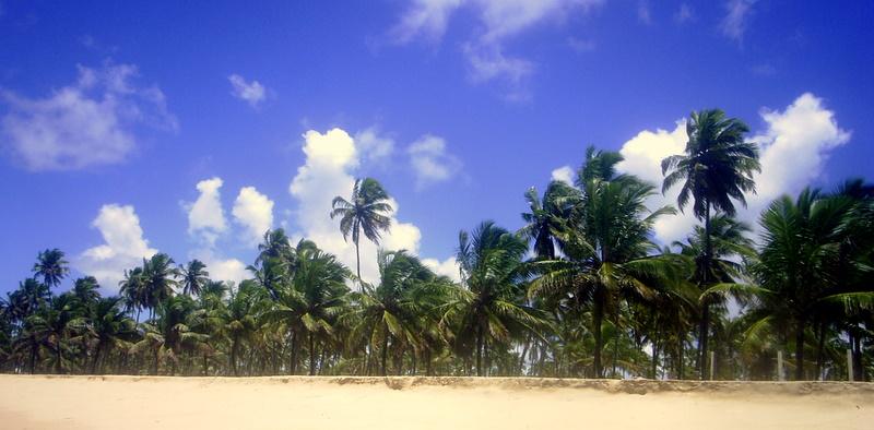 Palm Lined Beach