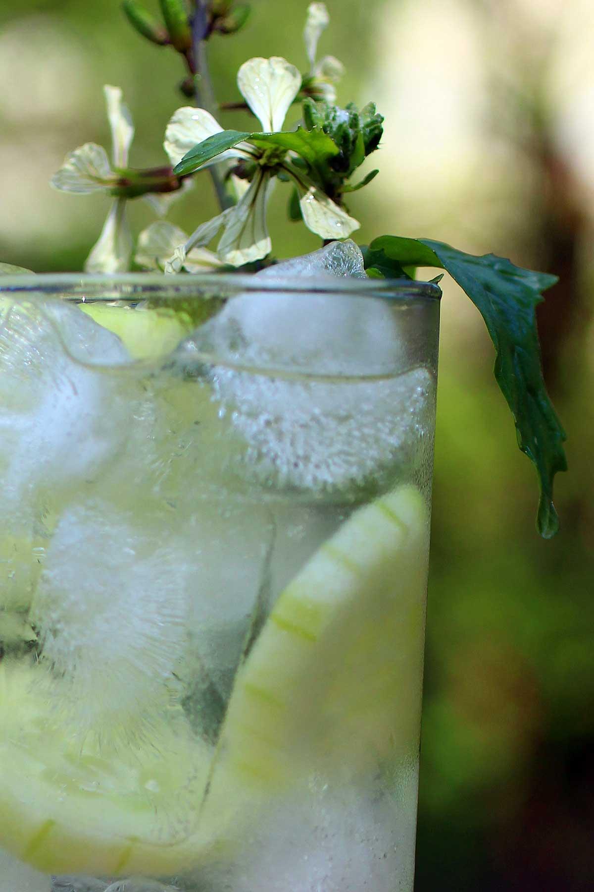 cucumber white wine sangria spritzer
