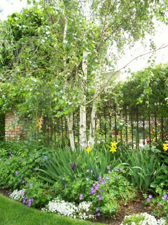 fence landscaping ideas 24