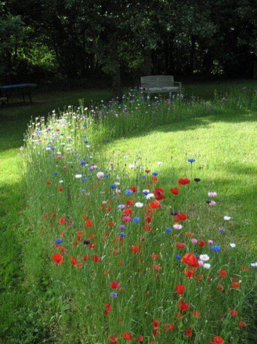 flower backyard ideas 8
