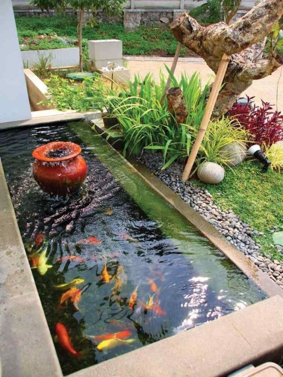 small backyard pond 2