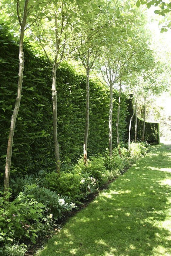 backyard trees ideas 12