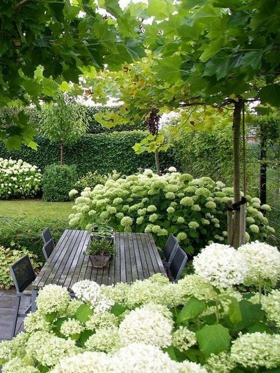 backyard trees ideas 22