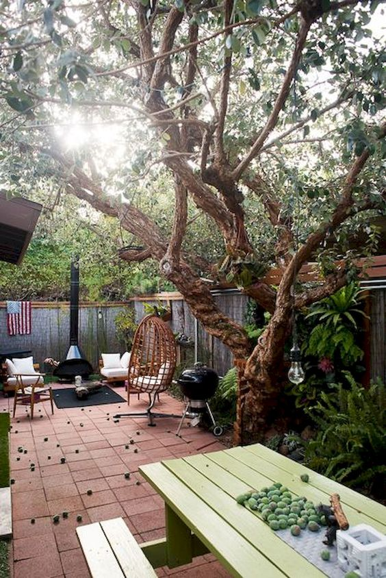 backyard trees ideas 24