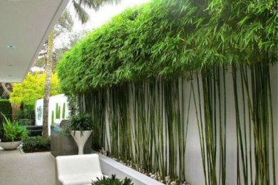 backyard trees ideas feature
