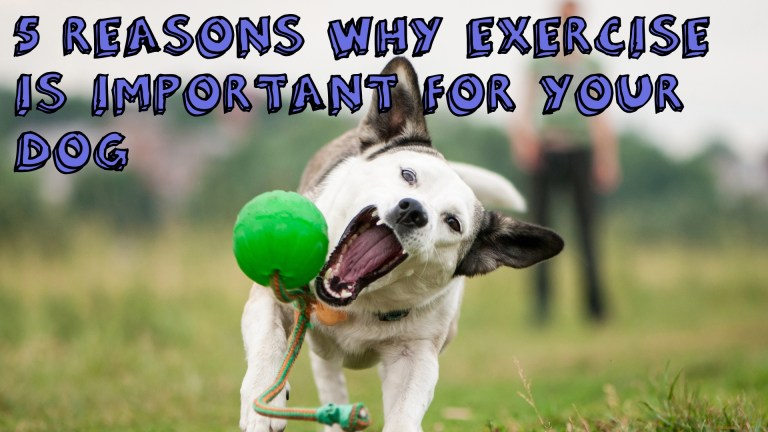 Why Exercise Is Vital for Your Dog