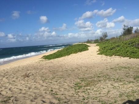 Kaena Point (looking back along the North Shore)