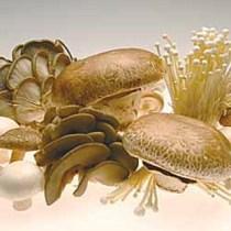 Mushroom Breakfast Toasts