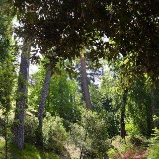 Verdure du jardin de la villa Serbelloni, Bellagio, Italie