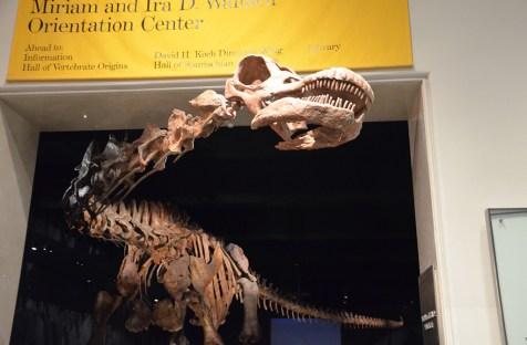 Le grand dinosaure au Musée d'Histoire Naturelle de New York