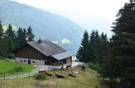 Un chalet dans les alpages Suisses