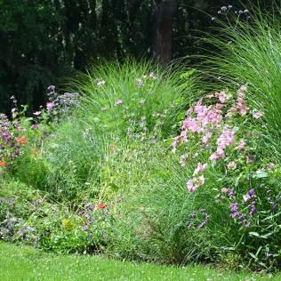 Fleurs des champs dans un parc de Lausanne