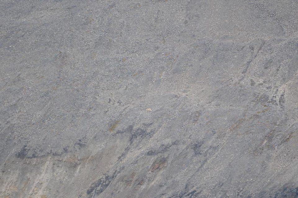 Grande falaise sur laquelle on distingue de très loin une tâche blanche : un ours polaire !