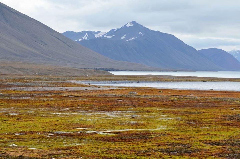 Paysage vert de la toundra du Svalbard