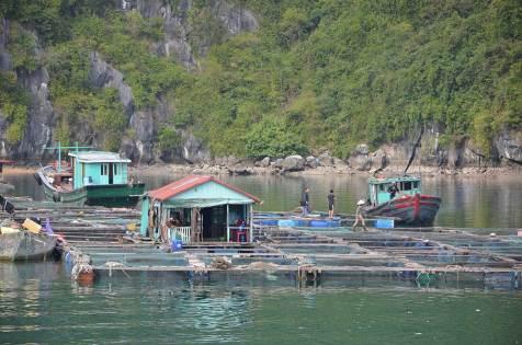 Villages flottants, baie de Lan Ha, Vietnam