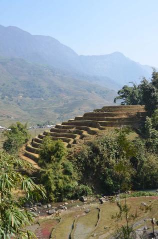 Rizières en terrasses, Sapa, Vietnam