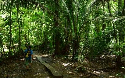 Notre guide en pleine randonnée au Corcovado, Costa Rica