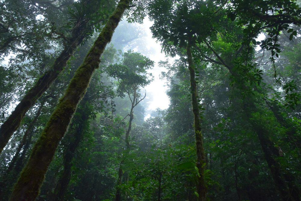 Forêt de nuages de Monteverde, Costa Rica