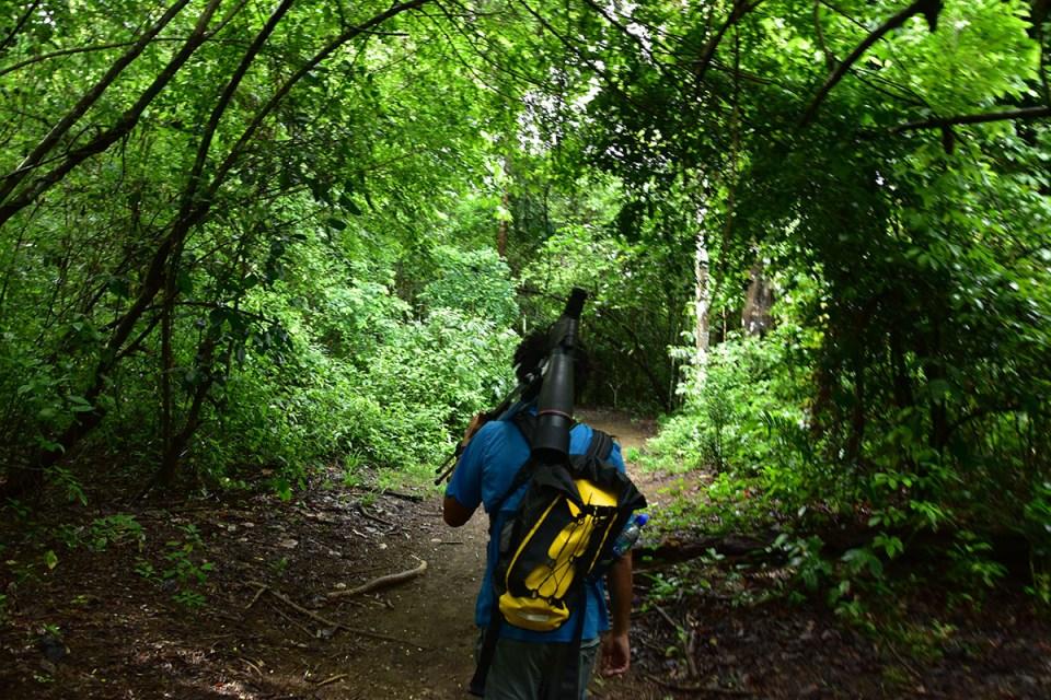 Notre guide s'enfonce dans la forêt du Parc Corcovado, Costa Rica