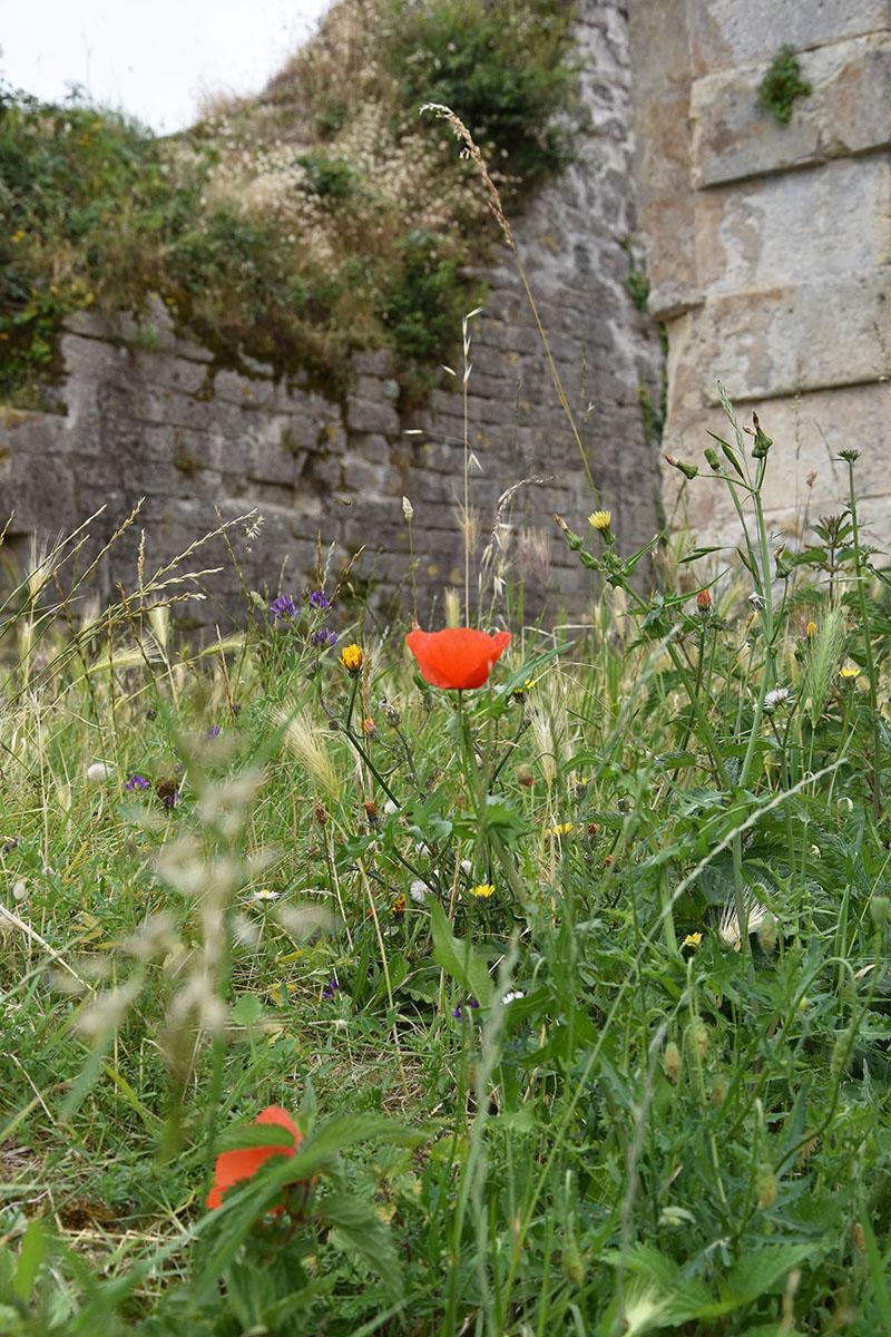 Vue sur la citadelle du Château-d'Oléron