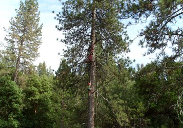 TEM14-pic-TreeD59977
