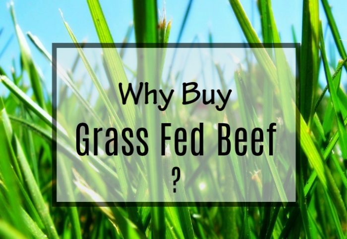 Why Buy Grass Fed Beef | Reclaiming Yesterday