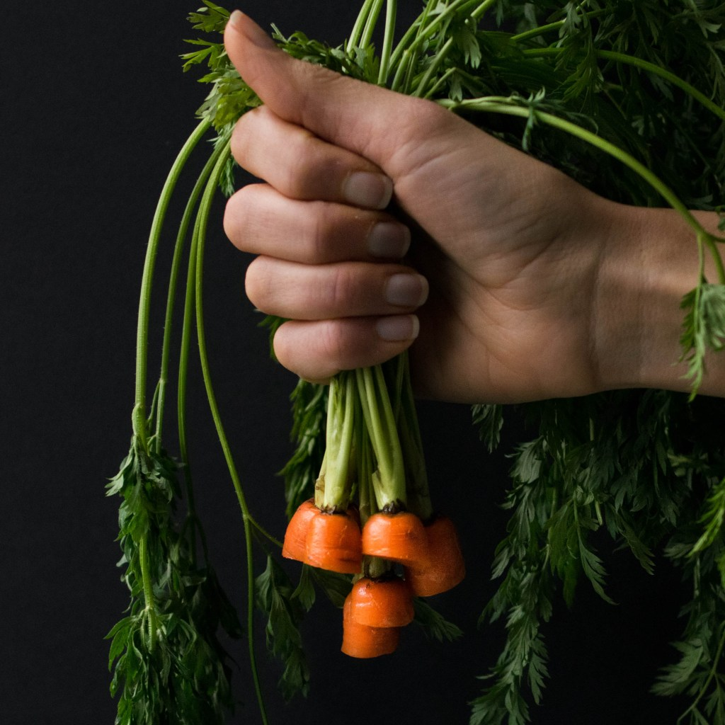carrot hold