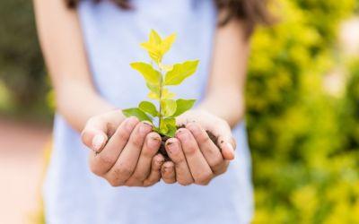 Educar para a sustentabilidade – o que fazemos cá em casa