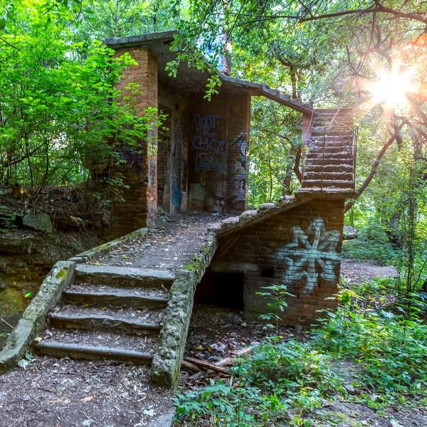 Химкинский лес