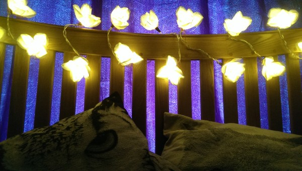 Blaze On Fairy Lights Review