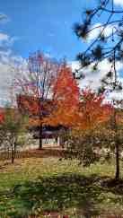 Fall in full color at UW Stevens Point