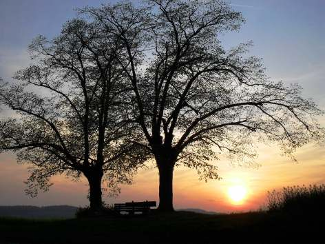 What is the good of your stars and trees, your sunrise and the wind, if they do not enter into our daily lives? - E.M. Forster -