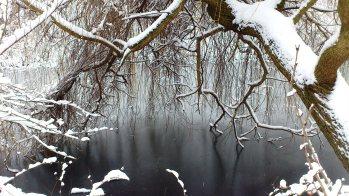 Ein Trauerweide, im Schnee noch viel schöner.