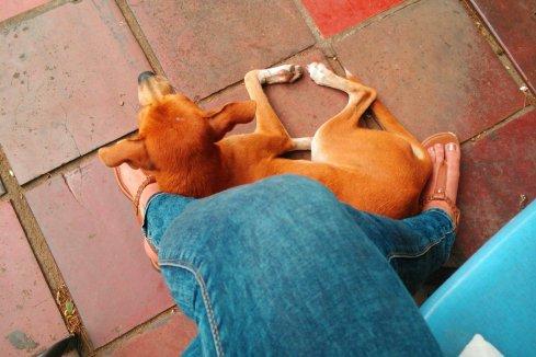 Mein Pflegehund Caramelo