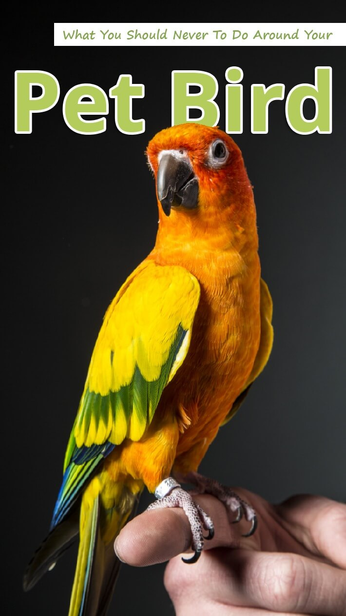 What You Should Never To Do Around Your Pet Bird