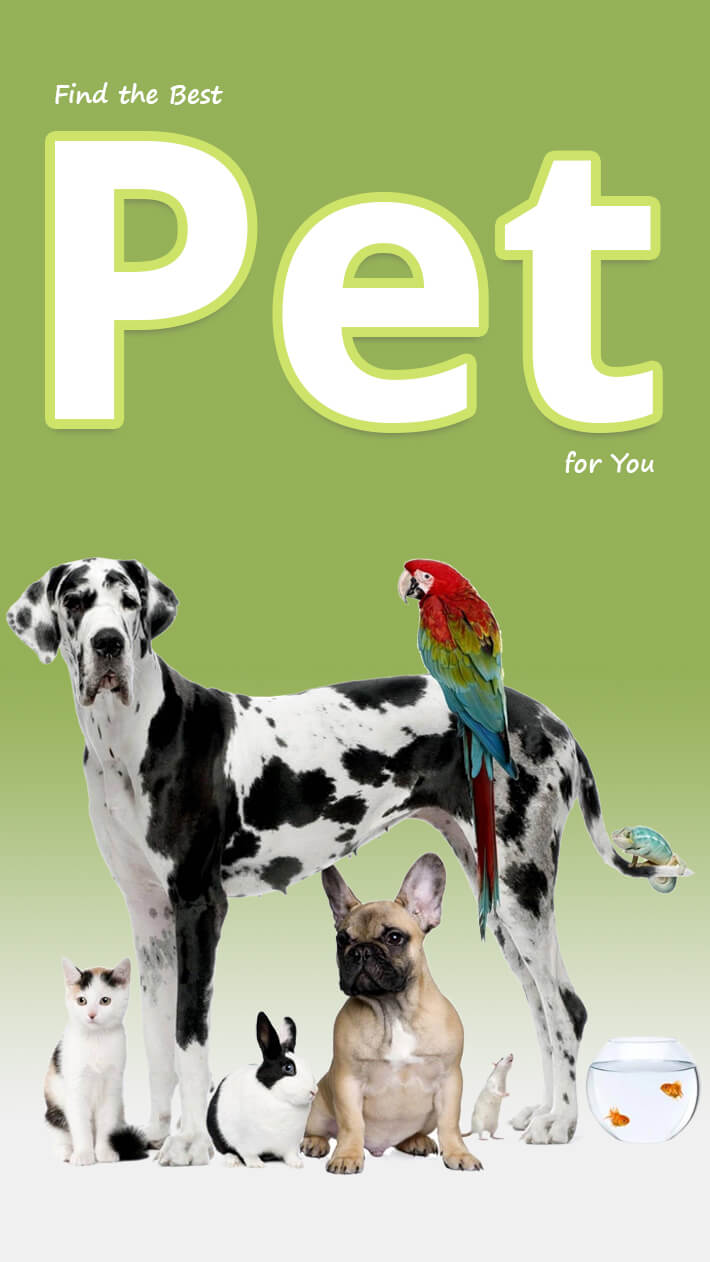 Find the Best Pet for You