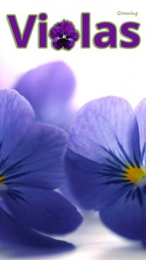 Growing Violas