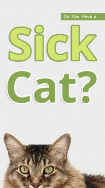 Do You Have a Sick Cat?