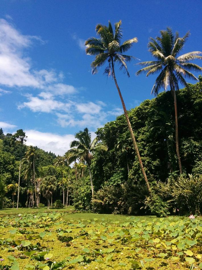 Vaipahi Gardens