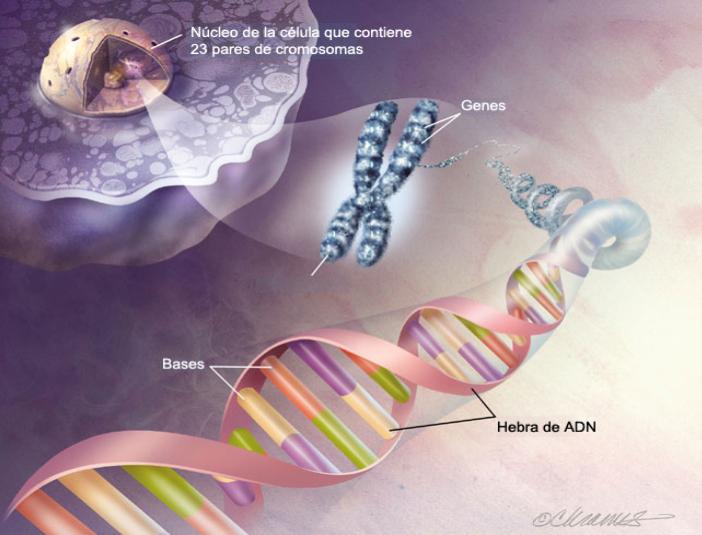 Células, genes y ADN (2/3)