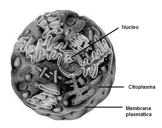 Células, genes y ADN (1/3)