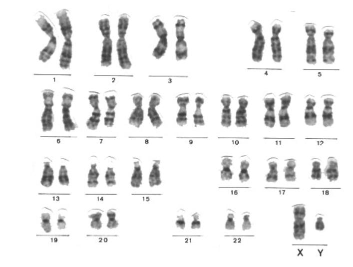 Células, genes y ADN (3/3)