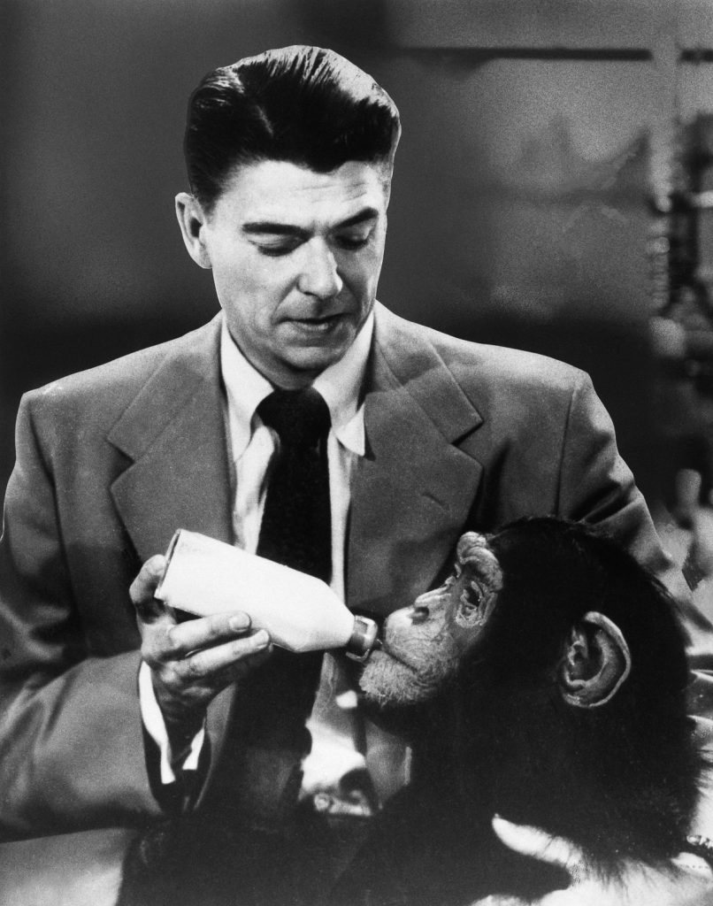 1951 --- Ronald Reagan Feeding Chimp in Movie Scene --- Image by © Bettmann/CORBIS