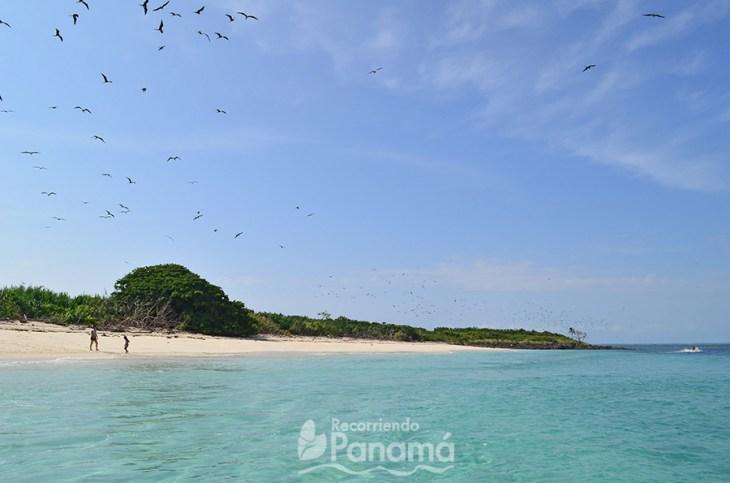 Aves Fragata en Isla Iguana. Los Mejores Sitios