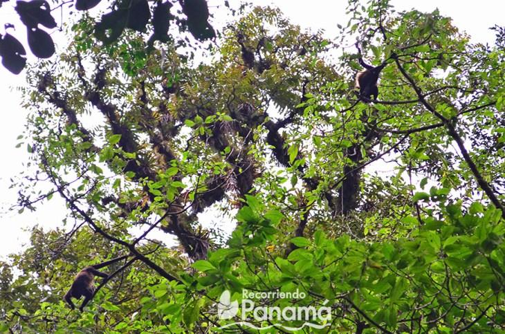 Monos en el sendero hacia la Cascada Escondida. Road Trip