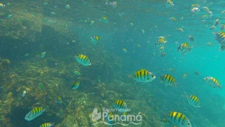 Peces en Isla Iguana