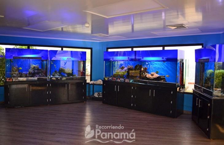 Tropical Fish Exhibition