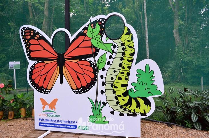 Photobook at Metropolitan Butterfly Farm