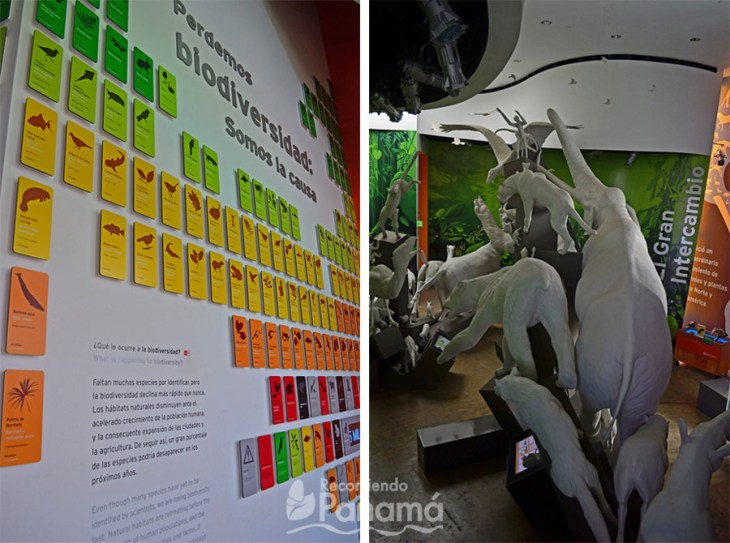 Mural at Perdemos Biodiversidad (Showcase of Biodiversity) room and el gram intercambiio oom.