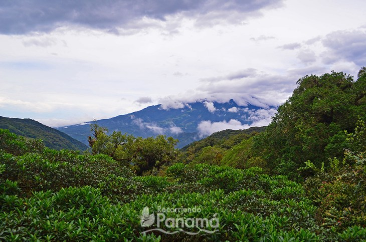 Vista del Volcán Barú.